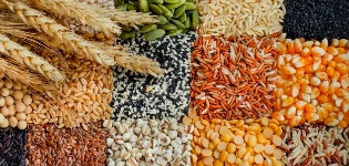 Grains Category - My Online Vipani
