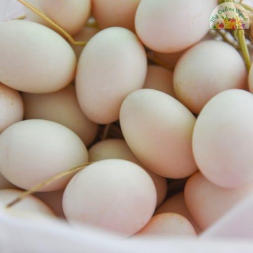 White Duck Egg Mutta Pack of 10 My Online Vipani