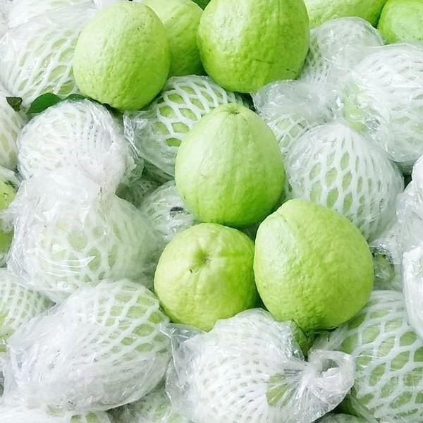 Guava Thailand