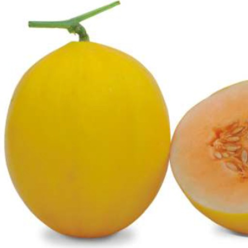 Muskmelon Yellow