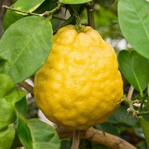 Curry Naranga