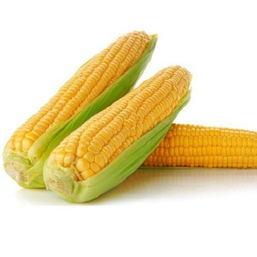 Sweet Corn Pack Of 2
